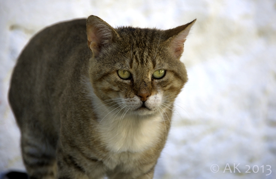 Thassos - Tierschutz - ACT