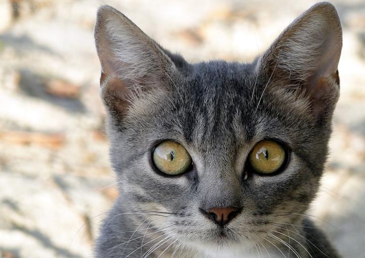 Thassos-Cats (2)