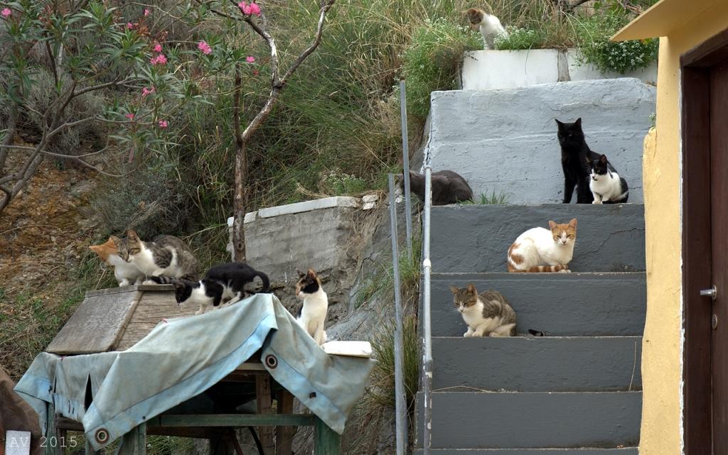 Griechische Katzen